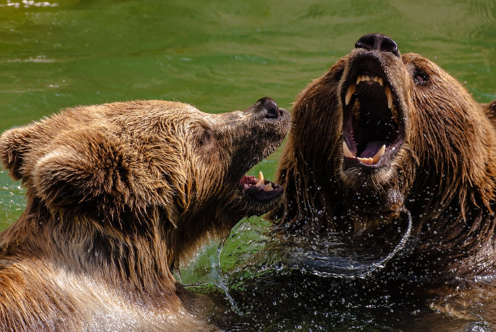 Three Major Indices are Approaching Bear Market Status